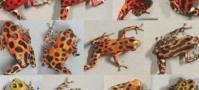 assortment of frogs