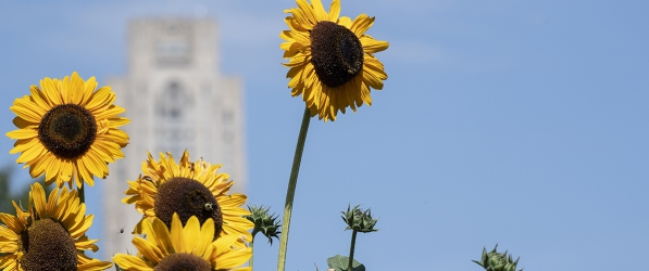 Cathedral of Learning with sunflowers